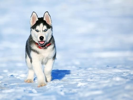 Pick a dog breed: