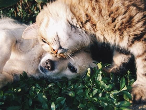 Do you prefer cats or dogs?