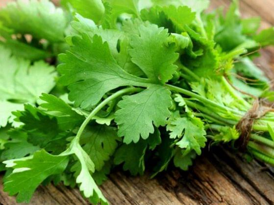 Describe the taste of cilantro. Do you like it?
