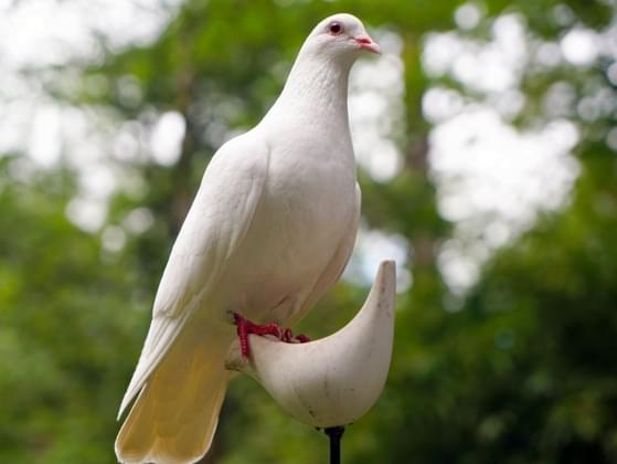What's the first thing you think when you see a dove?