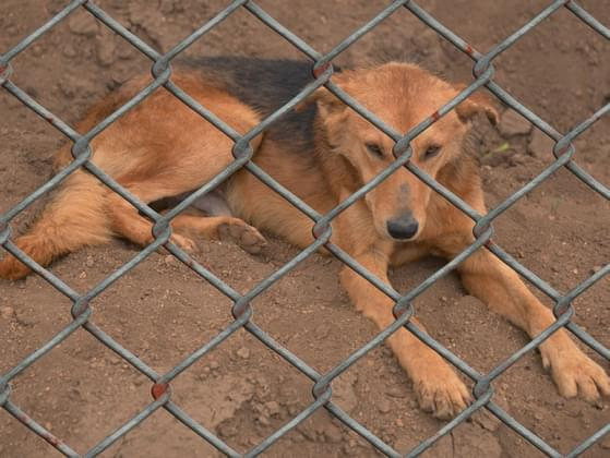 Would you ever consider adopting from an animal shelter?