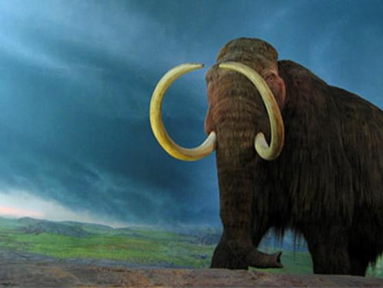 What extinct animal would you like to meet?