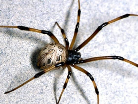 You're at a friend's for dinner and the group notices a HUGE spider, what happens next?