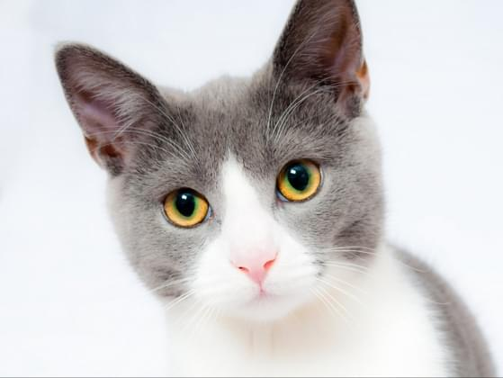 Which word would you use to describe a cat?