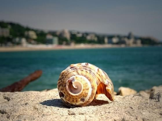 Which word would you use to describe a seashell?