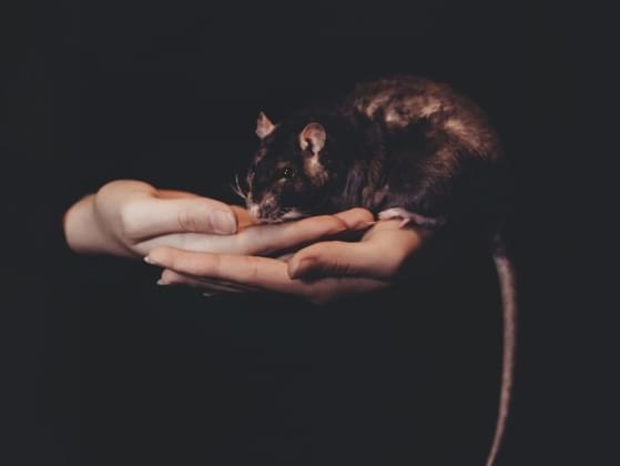 Which word would you use to describe a rat?