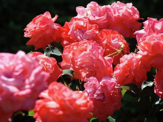 Favorite flower?