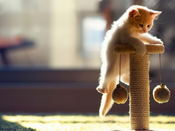 What is your cat doing right now? If you do not see your cat at the moment, what do you think it is doing.