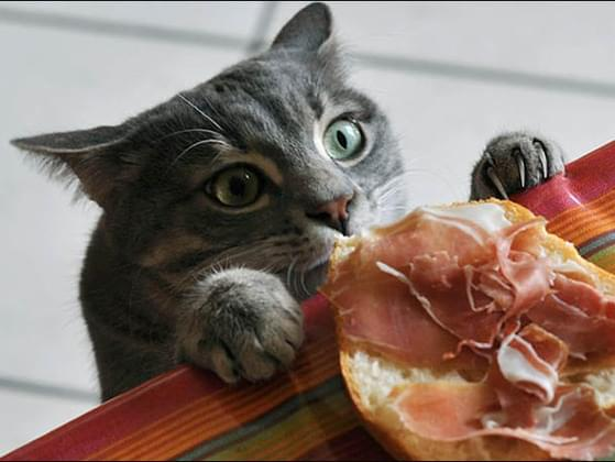 What does your cat do when he's hungry?