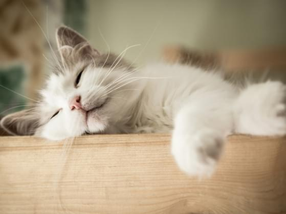 Will your cat sleep with you peacefully?