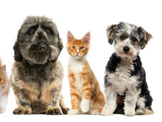 Choose a pet: