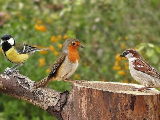 Pick a singing bird