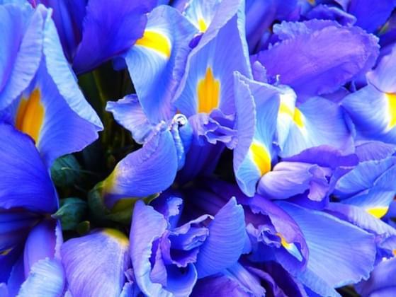 Pick a flower