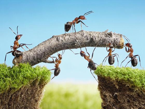 A GROUP OF ANTS IS A: