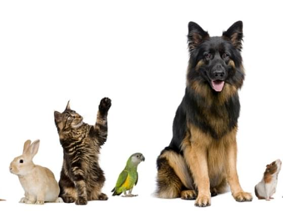 Choose a pet.