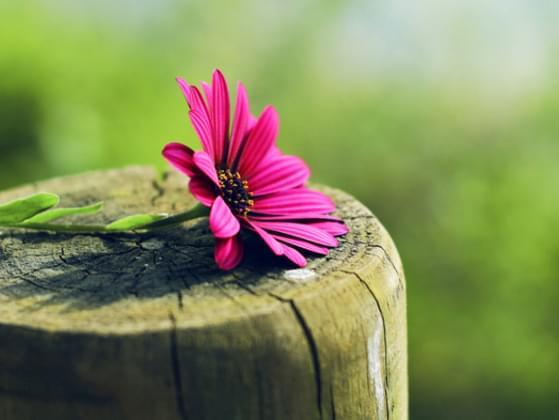 Choose a flower: