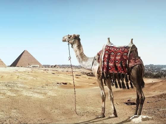 You decide to go on a coach tour of Egypt. By the end of your holiday.....