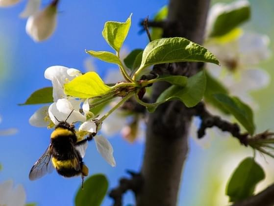 You see a bumble bee! What do you do?
