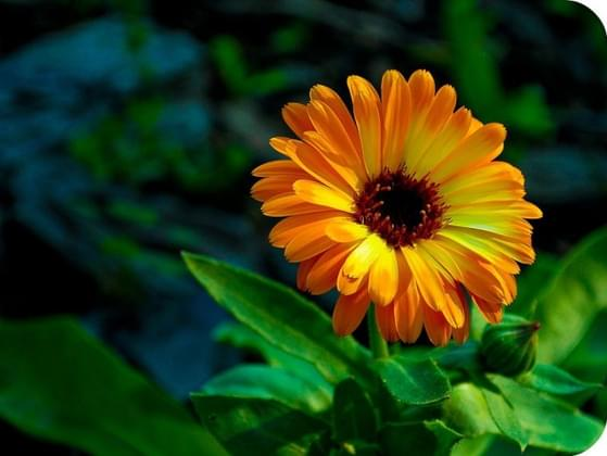 What type of flower is your favorite?