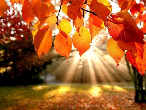 What is your favorite part of autumn?