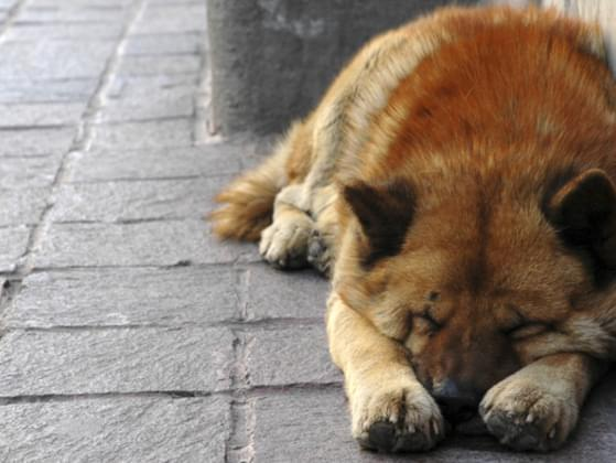 You see a homeless dog in the street. What do you do?