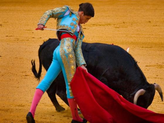 What do you think about bullfighting?