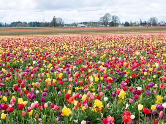 What is your favorite flower?