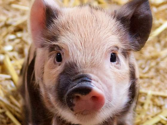 Which of these baby animals makes you feel warm and fuzzy?