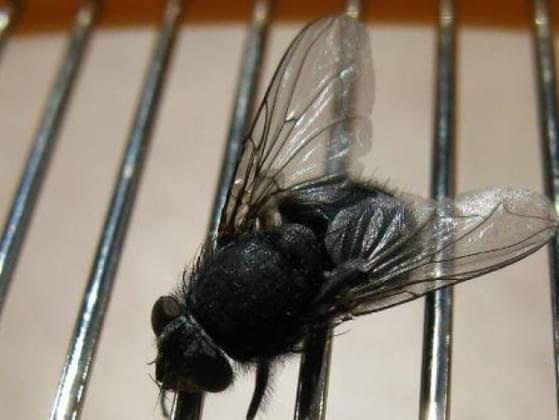 On a scale of 1-10, with 10 being the most satisfied, how satisfied do you feel when you FINALLY swat that fly that has been buzzing around your ear at home all night?