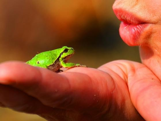 How many frogs have you kissed?