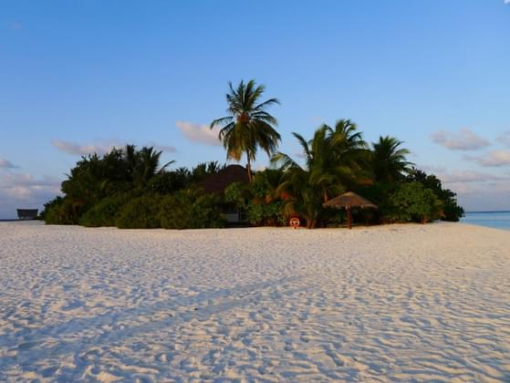 If stranded on a desert island, what could your family not live without?