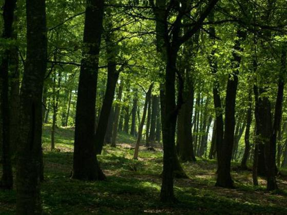 If you were lost in a large forest with one item, what would it be?
