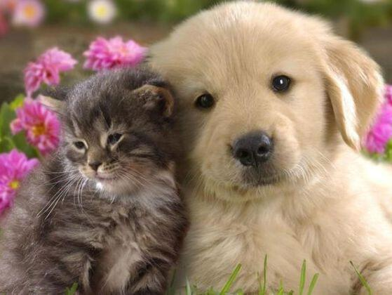 If you could have any animal as a pet in your home, which animal would you choose?