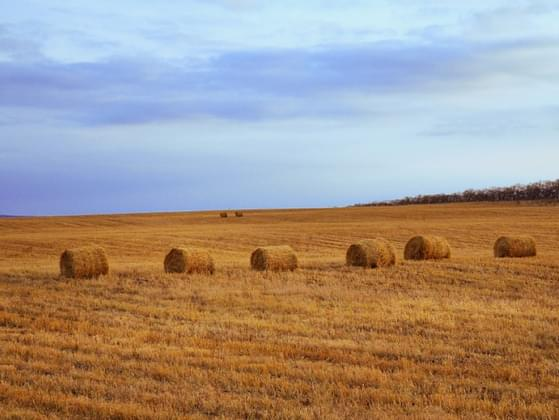 A farmer has five haystacks in one field and four haystacks in another. How many haystacks would he have if he combined them all in one field?