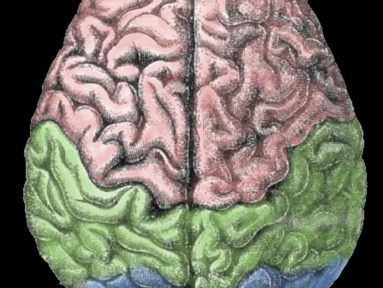 Are you a right-brained (creative) or left-brained (analytical/logical) thinker?