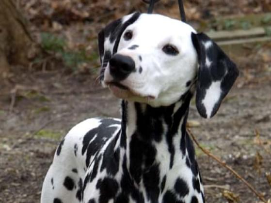 Which dog breed matches your personality best?