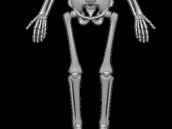 What is the scientific name for the shin bone?