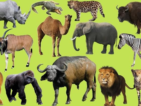 Which of these animals best represents happiness to you?