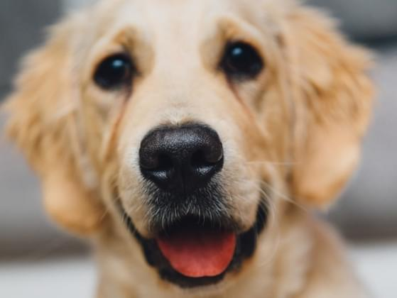 How do you feel about dogs?