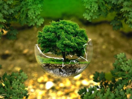 Do you consider yourself an environmentalist?