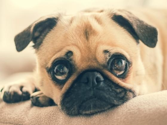 One of your co-workers is stammering on about her dog. You couldn't care less. What do you do?
