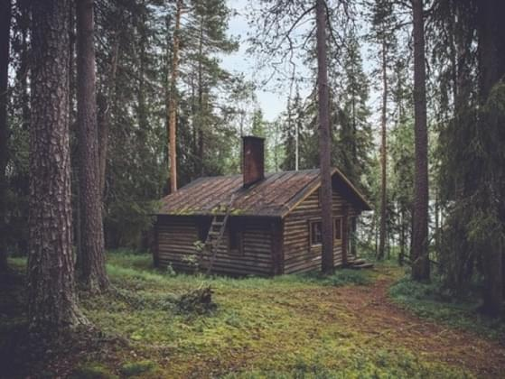Would you prefer to live in the city or in the woods?