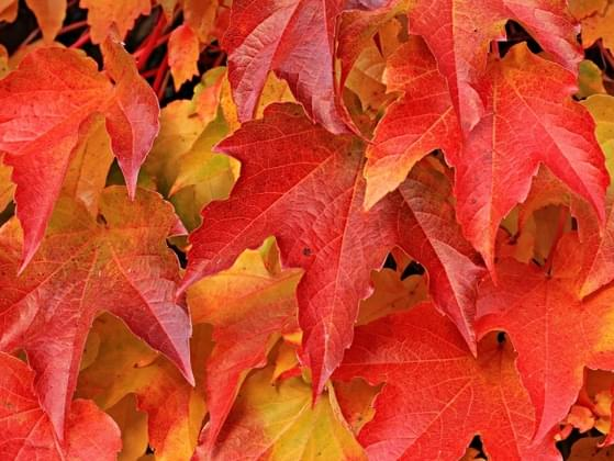 First things first, is fall your favorite season?