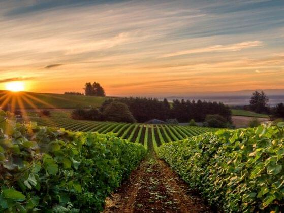The Willamette Valley in Oregon is famous for producing wines derived from which famous grape?