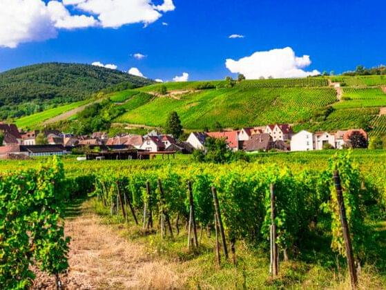 The Alsace region of France is internationally recognized for which of the following white wines?
