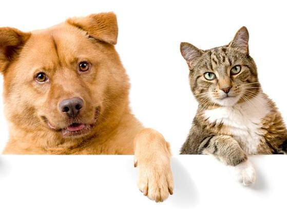 Do you like cats or dogs?