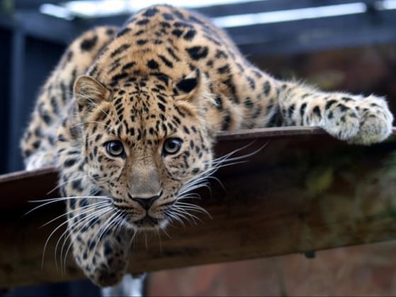 Choose a safari animal!
