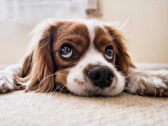 Will you allow pets in your cafe?