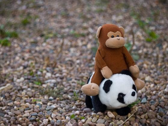 Whom would you like to be - a monkey or a panda?