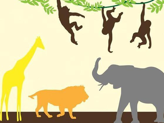Which animal do you relate to most?